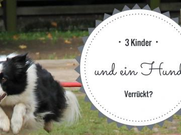 3 Kinder und ein Hund - Verrückt? auf kinderalltag.de