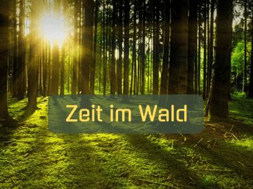 Zeit im Wald auf kinderalltag.de